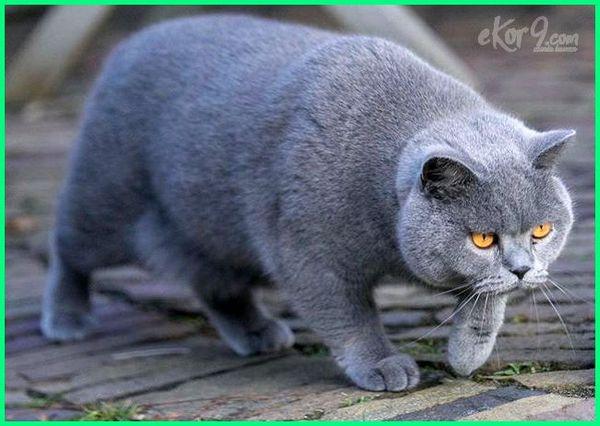 foto kucing paling cantik di dunia, foto kucing yg paling cantik, foto kucing yang paling cantik, gambar kucing paling cantik, gambar kucing yang paling cantik, gambar kucing yg paling cantik,