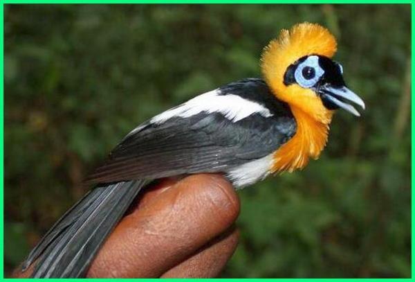 apa hewan khas papua nugini, binatang papua nugini, hewan aneh di papua nugini, hewan asli papua nugini, hewan dari papua nugini, hewan di papua nugini, hewan endemik papua nugini