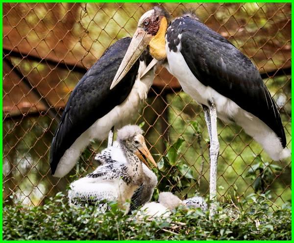 hewan langka di kebun binatang bandung