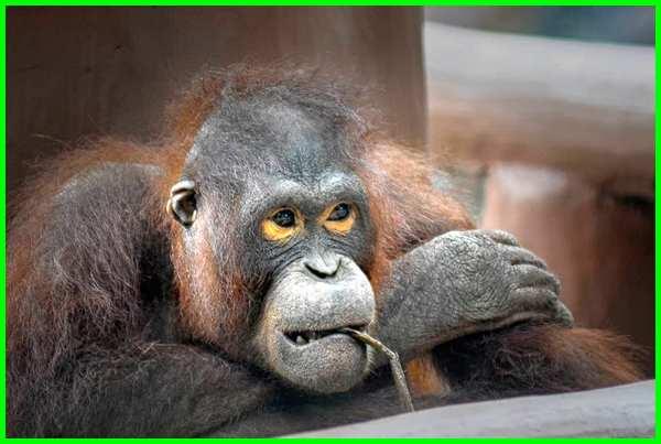hewan langka di kebun binatang bandung, wisata kebun binatang bandung