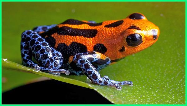 hewan paling berbahaya di hutan amazon