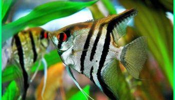7 Jenis Gaya Aquascape Dari Berbagai Negara Dunia Fauna Hewan Binatang Tumbuhan Dunia Fauna Hewan Binatang Tumbuhan