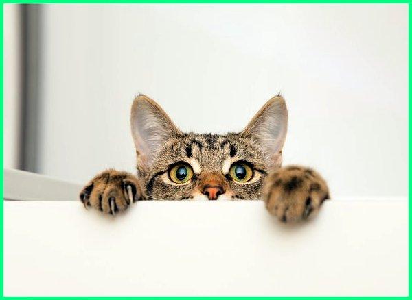 6 Rahasia Kucing yang Jarang Diketahui Orang