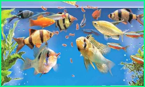jenis ikan hias dan cara merawatnya, jenis ikan hias dan cara pemeliharaannya, jenis ikan hias dan cara membudidayakannya, jenis ikan hias dan cara perawatannya, jenis ikan hias dan cara budidaya