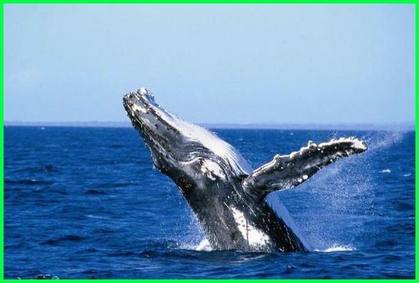 990 Gambar Hewan Yang Hidup Di Air Beserta Ciri-cirinya Gratis