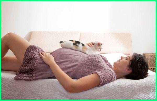 kucing penyebab wanita tidak bisa hamil, kucing untuk wanita hamil, efek kucing untuk wanita hamil, buah mata kucing untuk wanita hamil, bahaya bulu kucing untuk wanita hamil, kucing wanita mandul, kucing dan wanita hamil
