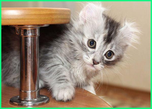 foto kucing kecil imut, gambar kucing kecil, gambar kucing kecil lucu, gambar kucing kecil imut, kucing jenis kecil, kucing kecil lucu menggemaskan, kucing kecil lucu dan menggemaskan