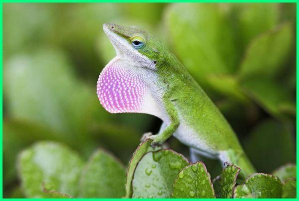contoh jenis reptil, gambar jenis reptil, nama jenis reptil, jenis reptil omnivora, semua jenis reptil