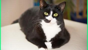 Nama Kucing Jantan Dan Betina Yang Bagus Bahasa Arab Dunia Fauna Hewan Binatang Tumbuhan Dunia Fauna Hewan Binatang Tumbuhan