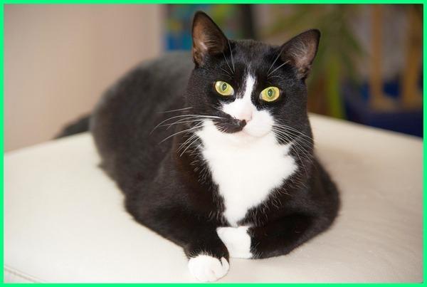 nama kucing betina yg bagus, nama kucing betina putih, nama kucing betina aneh, nama kucing betina artis, nama kucing anggora betina dan artinya, nama kucing perempuan anggora, nama kucing betina beserta artinya, nama kucing betina bagus, nama kucing betina belang, nama kucing betina berwarna hitam putih