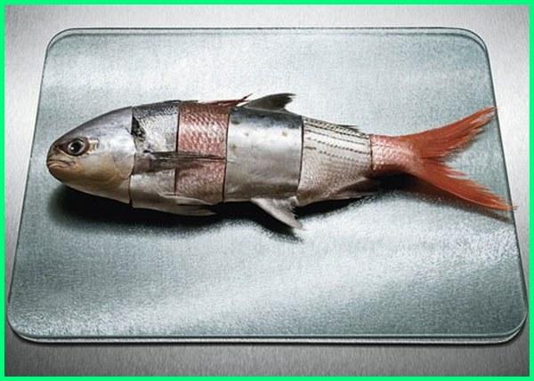 Apa Saja Ikan yang Mengandung Merkuri? Ketahui Levelnya di sini!