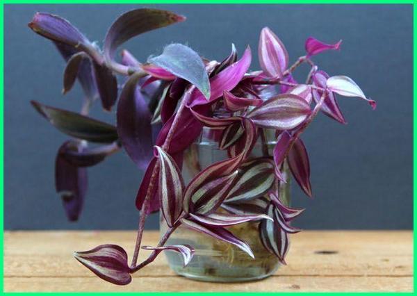 tanaman hias di botol air, tanaman hias yang di air, tanaman hias indoor di air, tanaman hias air adalah, tanaman hias aquarium air tawar, tanaman hias bermedia air