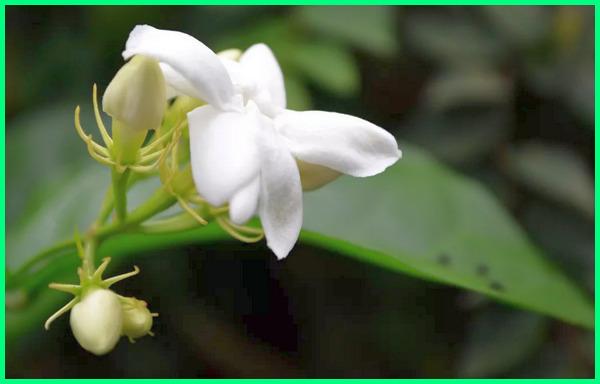 apa saja flora di indonesia, apa saja flora dan fauna di indonesia, apa saja jenis flora di indonesia, apa saja persebaran flora di indonesia, apa saja flora yang menjadi ciri khas indonesia, apa saja jenis flora dan fauna di indonesia, jenis flora indonesia, berapa flora di indonesia, kenapa flora dan fauna di indonesia beragam