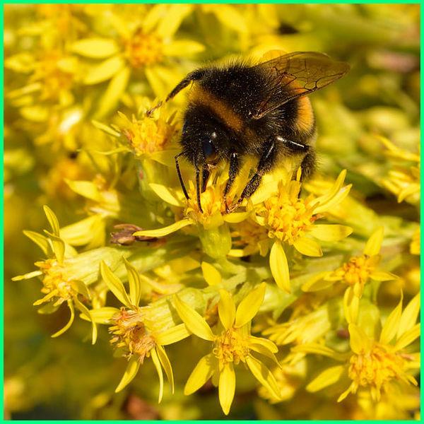 cairan bunga yang diserap lebah, cairan bunga yang dihisap lebah, cairan bunga yang disengat lebah, bunga favorit lebah, bunga yang dihisap lebah, bagian bunga yang dihisap lebah, bagian dari bunga yang dihisap lebah