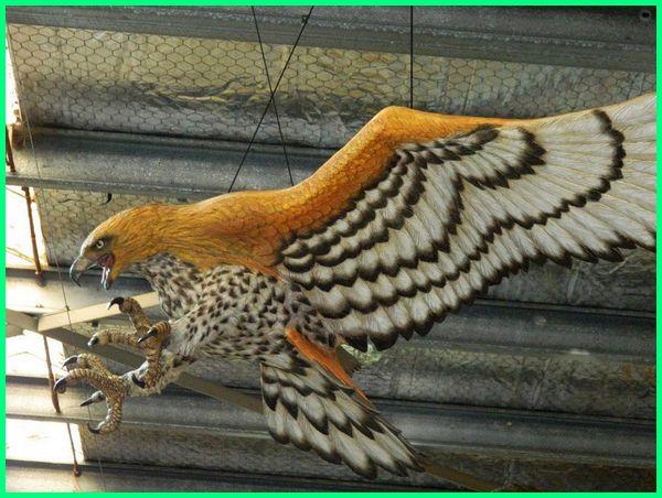 7 Jenis Burung Elang Terbesar di Dunia