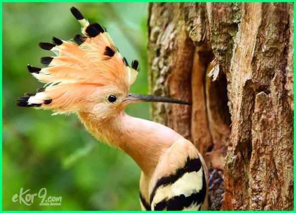 burung cantik dan indah, foto burung cantik, foto burung cantik di dunia, foto burung2 cantik, gambar burung cantik di dunia, burung hias cantik, jenis burung cantik