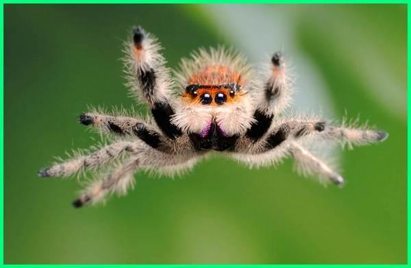 hewan melompat contohnya, hewan melompat dan memanjat, hewan melompat memanjat, hewan melompat cak lontong, hewan yang melompat lompat tts, hewan pandai melompat, gambar hewan melompat, hewan melompat lompat, hewan bisa melompat dan memanjat