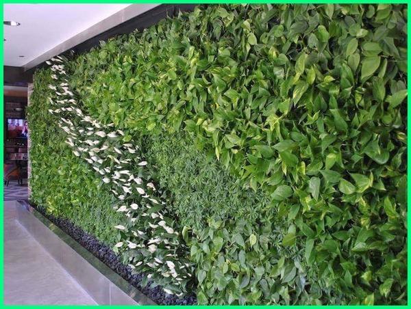 tanaman vertical garden indoor, tanaman buat vertical garden, contoh tanaman vertical garden, tanaman cocok vertical garden, cara membuat tanaman vertical garden, tanaman yang digunakan untuk vertical garden, jenis tanaman vertical garden indoor