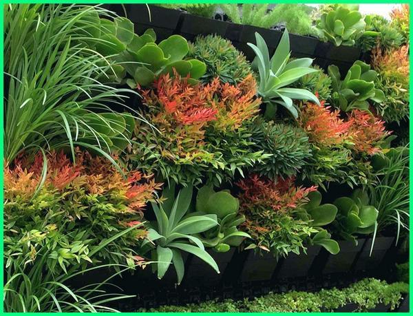 tanaman vertical garden outdoor, tanaman vertical garden indoor, tanaman buat vertical garden, contoh tanaman vertical garden, tanaman cocok vertical garden
