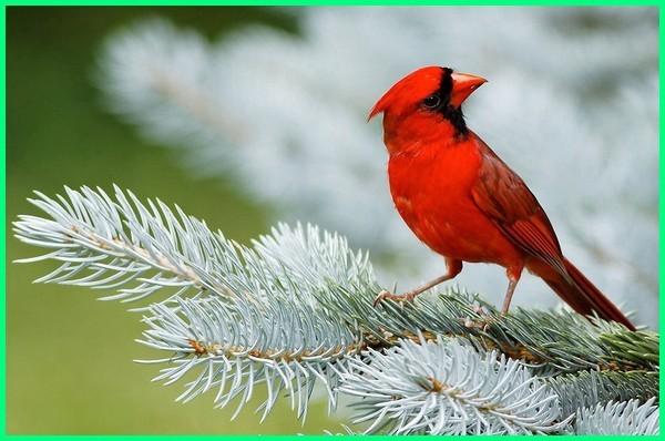 burung paling termahal di dunia, harga burung paling mahal di dunia, burung yg paling mahal di dunia, foto burung paling mahal di dunia, burung yang paling mahal di dunia, jenis burung paling mahal di dunia