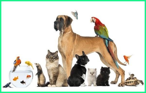 apa yang dimaksud hewan peliharaan, keterangan tentang hewan peliharaan, penjelasan hewan peliharaan, jenis hewan peliharaan di dunia, jenis hewan peliharaan di indonesia, macam macam hewan peliharaan dan penjelasannya, jenis hewan hias peliharaan
