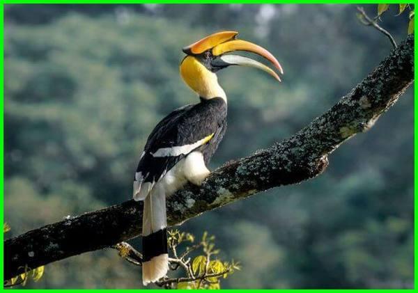 950 Gambar Binatang Dan Ciri Cirinya Dalam Bahasa Inggris Terbaru