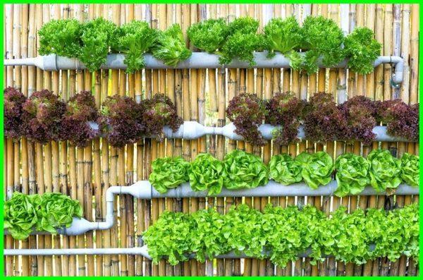 kebun sayur mini rumah, kebun sayur mini belakang rumah, kebun sayur mini di belakang rumah, kebun sayur mini di rumah, kebun sayur kecil belakang rumah, kebun sayur kecilku, kebun sayuran kecil, desain kebun sayur kecil