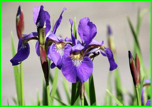 tanaman yang termasuk vegetatif, tanaman vegetatif alami, tanaman vegetatif adalah, tanaman vegetatif contohnya, tanaman apa vegetatif, tanaman vegetatif, tanaman hias vegetatif buatan, tanaman yang berkembang secara vegetatif