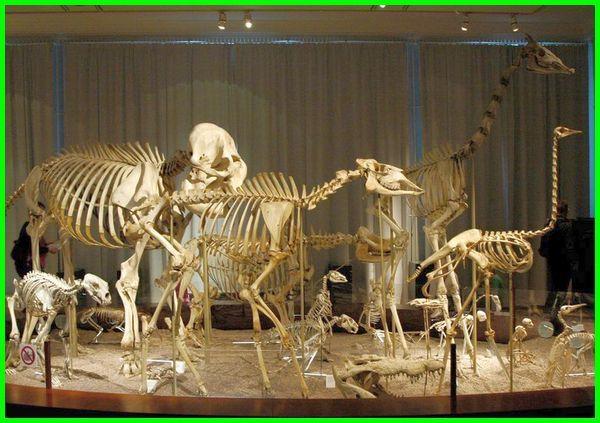 ciri vertebrata brainly, ciri vertebrata dan contohnya, ciri hewan vertebrata adalah, ciri utama vertebrata adalah, ciri binatang vertebrata, ciri hewan vertebrata brainly, vertebrata ciri-cirinya, sebutkan karakteristik hewan vertebrata, salah satu karakteristik hewan vertebrata adalah, sebutkan 5 karakteristik vertebrata