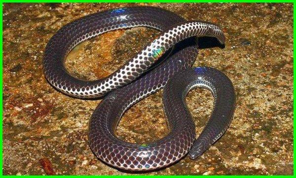 mimpi ular yang indah, ular indah, mimpi melihat ular yang indah, ular paling indah di dunia, ular ter indah