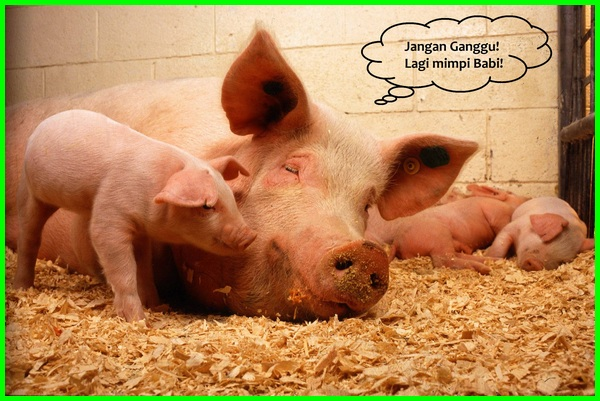 mimpi babi masuk rumah menurut islam, apa arti mimpi babi, mimpi babi togel, mimpi babi hutan, mimpi babi masuk rumah, mimpi babi 2d, mimpi babi masuk rumah togel, mimpi babi beranak togel, mimpi babi mati, mimpi babi artinya, apa maksud mimpi babi, apa arti mimpi babi masuk rumah, apa arti mimpi dikejar babi