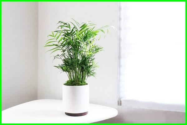 tanaman tanpa matahari langsung, tanaman tanpa sinar matahari, tanaman indoor tanpa matahari, tanaman tanpa sinar matahari langsung, tanaman hias tanpa matahari, jenis tanaman tanpa matahari