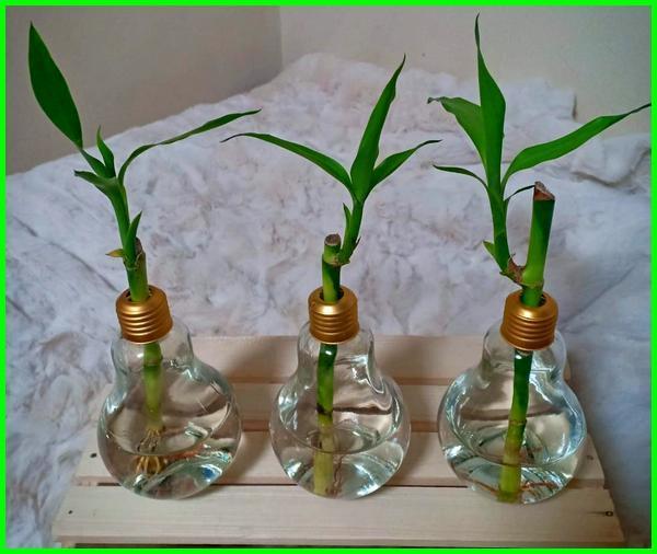 tanaman dalam botol air, tanaman hias botol air, tanaman di botol air, tanaman hias dalam botol air, tanaman hias di botol air, tanaman air dalam botol, tanaman air di botol