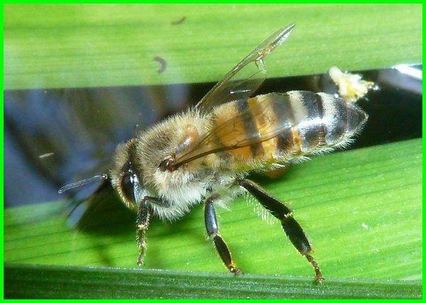hewan yang berbau harum, hewan paling wangi, hewan wangi kembang, hewan berbau wangi, hewan wangi pandan