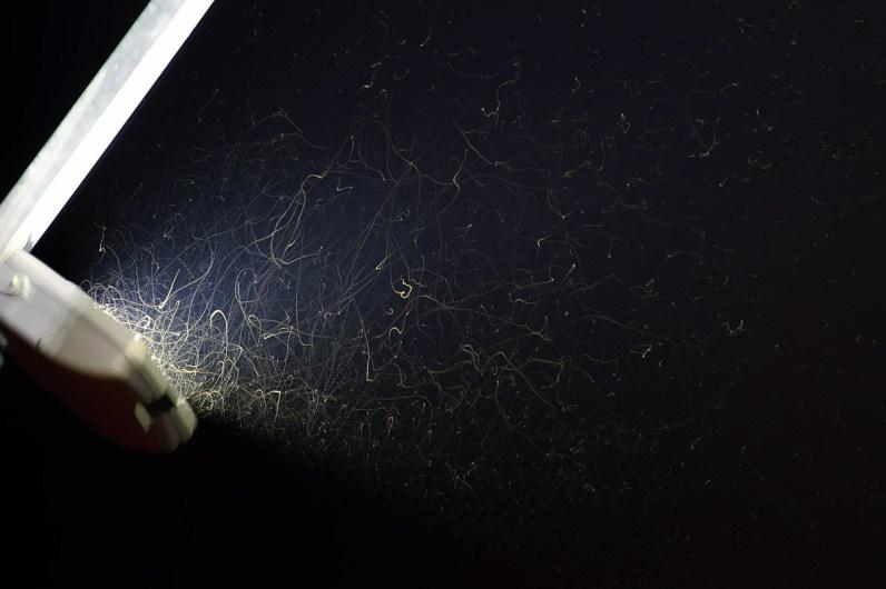 Kukci uhvaćeni u snop rasvjete reklamnog panoa