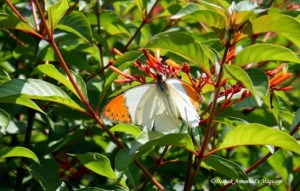 Beautiful butterflies are a common sight at the park
