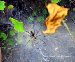 A spider at the park