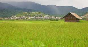 a rice field in apatani, arunachal pradesh
