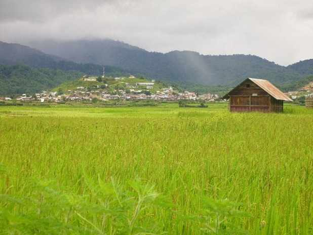 a rice field in apatani