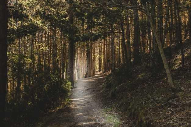 Vivaio Forestale Abruzzo : Lusb lancia un appello: prendiamoci cura dei nostri boschi. in