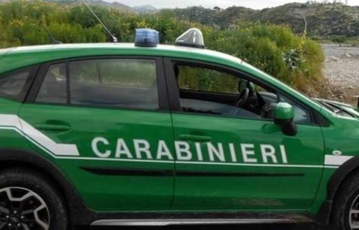 Legittimo l'assorbimento dei Forestali nell'Arma dei Carabinieri: lo ha stabilito la Corte Costituzionale