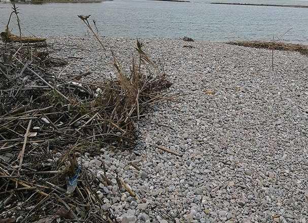 Maltempo sulla costa, tonnellate di legname da rimuovere lungo l'arenile