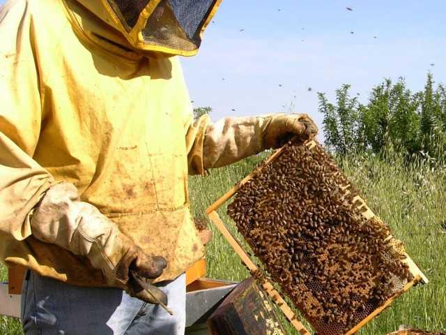 Api stressate dal caldo smettono di volare: crolla la produzione del miele