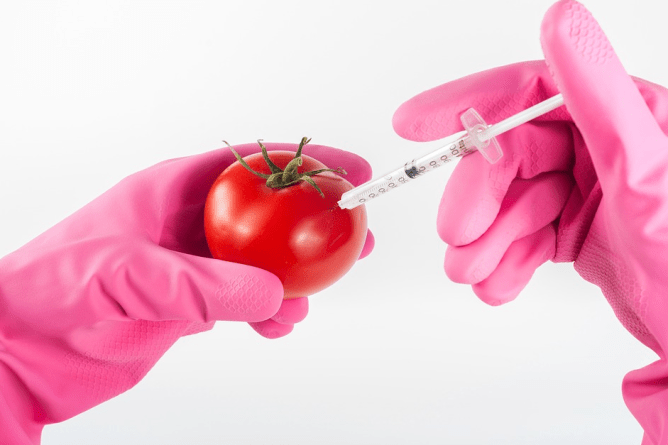 injected tomato