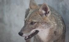 "Which Wolf Are You Feeding?<br>〜あなたの中に存在する""愛の狼""と""憎しみの狼""〜"