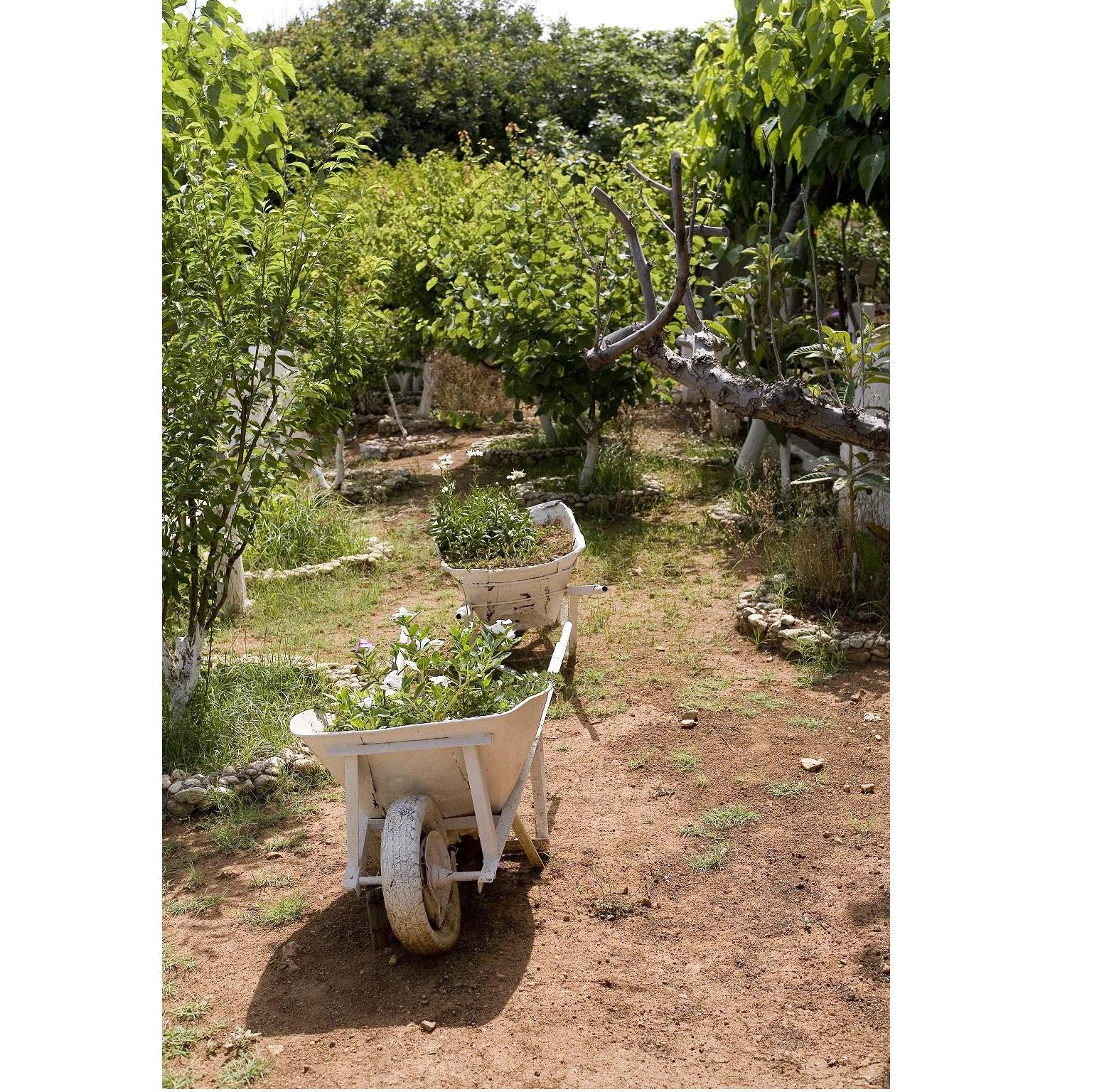 Organic Organic~ギリシャのナチュラルフード~