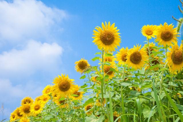 夏が祝福するエネルギー<br>〜太陽の光で静かに瞑想を〜