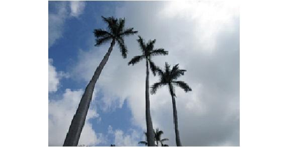ハワイアンエネルギー PART 2<br>ハワイアンソルトで魂の浄化!
