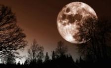 11月14日の満月は、人生で見られる最大級に大きな月⁉︎ さあ明日、満月を一緒に楽しみませんか?
