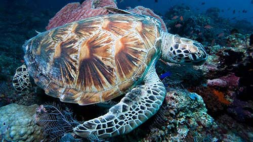 Galerie photos des tortues